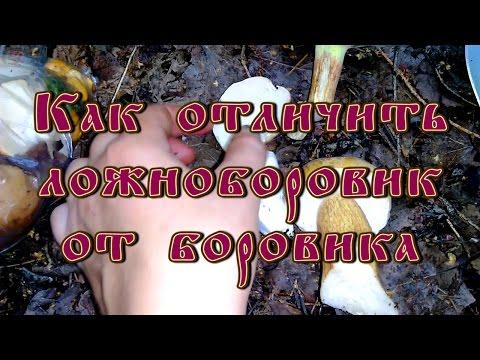 Как отличить ложноборовик (желчный гриб) от боровика (белого гриба)