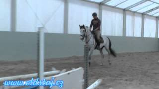 sold cookie 2012 clintord ii x cascavello training 06 15
