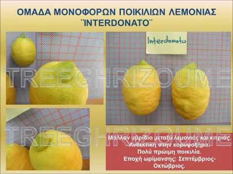 Lemon tree cultivars_Ποικιλίες λεμονιάς