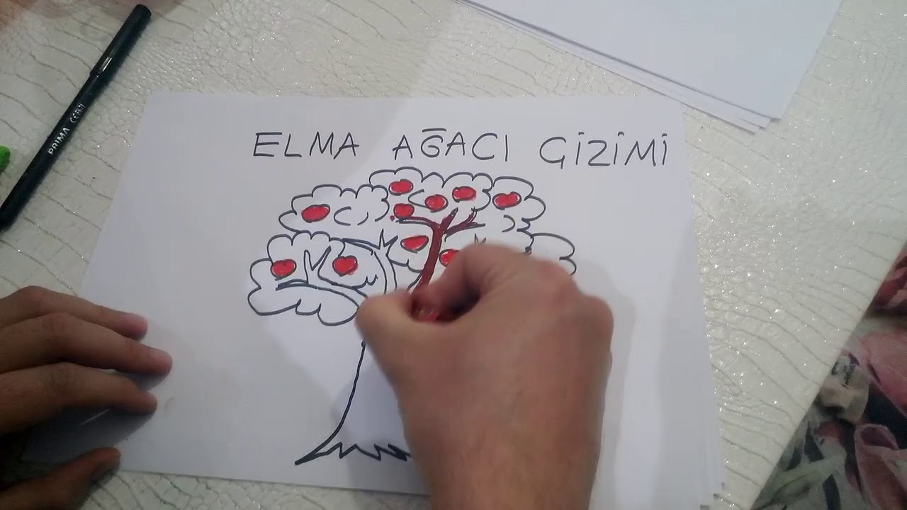 Elma Agaci Cizimi Apple Tree Drawing Youtube