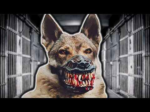 TOP 10 SCARIEST DOGS IN THE WORLD!