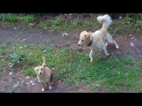 How LADY DOG is meeting to her husband :D - Dogs Being Jerks