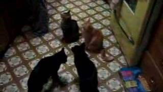 Cats Sing for their Supper