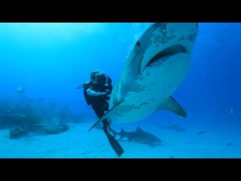 "Ocean Ramsey dives with Sharks for Conservation. Water Inspired Music: ""Hayling"" by FC Kahuna"