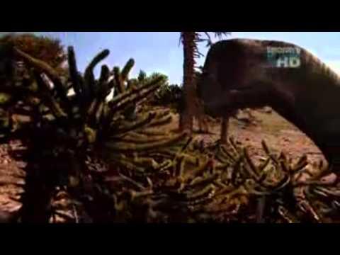 Dinosaur Discoveries Alamosaurus