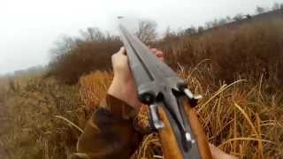 Охота на фазана с собакой видео