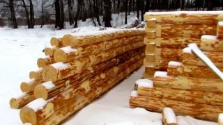 Кировский зимний лес от