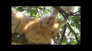 Кошки в природе.Cats in the wild.