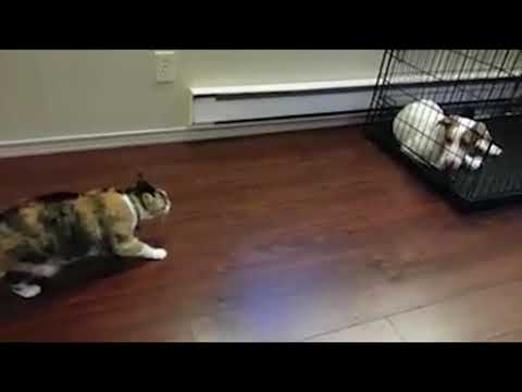 Cat and dog funny video