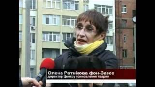 Харьковский приют для животных
