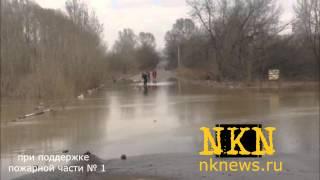 Люди и собаки переходят затопленную часть дороги