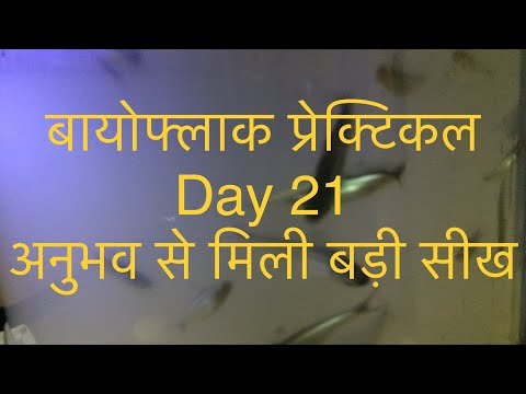 Repeat Pen pac 12th day report, Sajan David by Technical Aquaponics