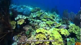 Coral Sea Dreaming Awaken 2010 clip1