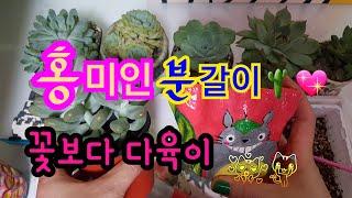 🌱다육이 홍미인 분갈이🌵만든 화분에 분갈이 💖 초봄에 5 일 장에서 만난 홍미인💖올리비아다육 Succulents