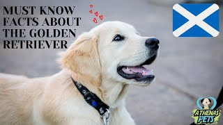 Getting To Know Your Dog's Breed: Golden Retriever Edition