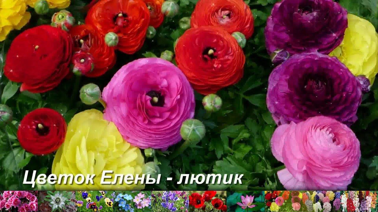 Цветок, соответствующий вашему имени картинки