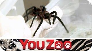 Die größten Tiere der Welt auf YouZoo