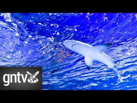 Shark Week exhibition arrives at Dubai Aquarium & Underwater Zoo