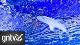 Shark Week exhibition arrives at Dubai Aquarium & Underwater Zoo