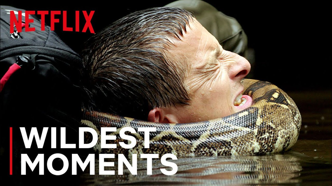 Download Bear's WILDest Moments 🤯 Animals on the Loose: A You vs Wild Movie | Netflix Futures