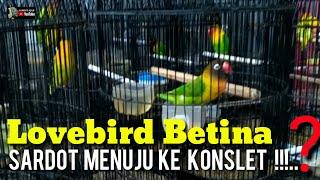 Download lagu LOVEBIRD BETINA SARDOT BISA KEKONSLET ?..