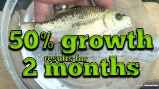 50% koi growth in 2 months. see how i got these results. koi fry growing fast