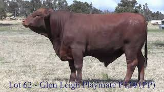 Lot 62 - Glen Leigh Playmate P124 (PP)