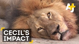 Cecil The Lion's Death Gets The White House And UN Involved
