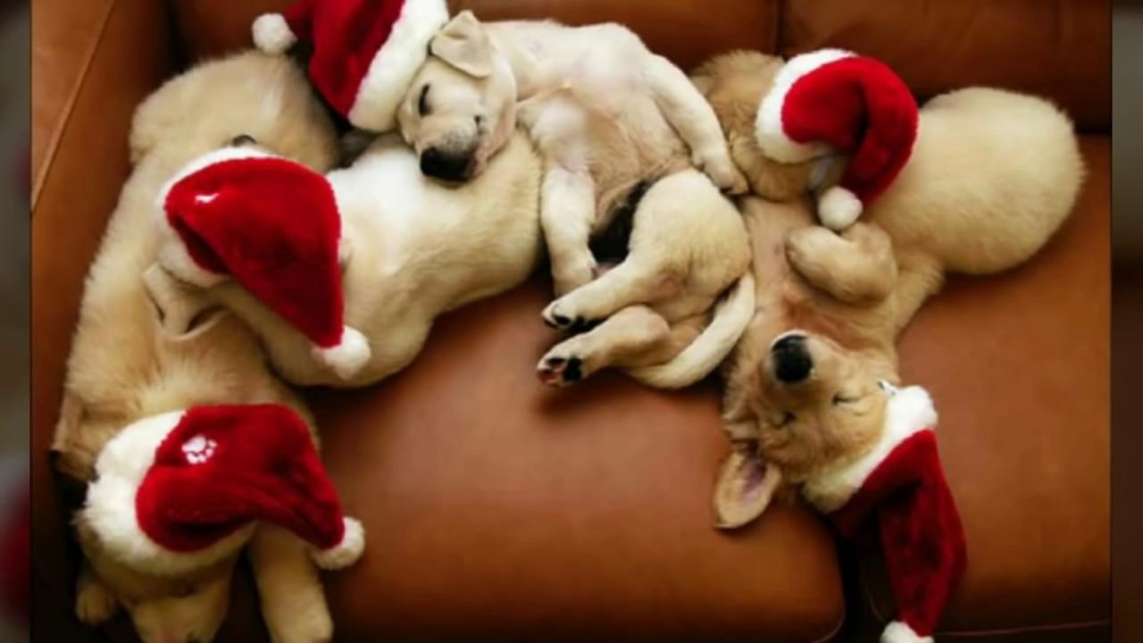 Tierische Weihnachtsgrüße.Tierische Weihnachten Julebuergerfee