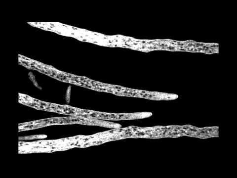 mycelium microscopy shotsmpg