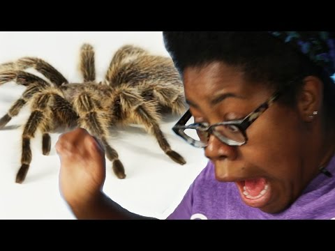 Coworkers Get Pranked With A Tarantula