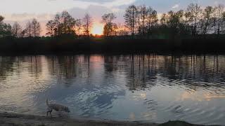 невероятно красивый закат с рекой, и игривые собаки-близнецы