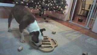 Sadie & Violet Vs Food Puzzle - Staffordshire Bull Terrier