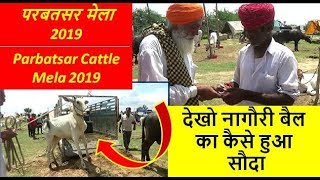 परबतसर मेला 2019 - नागौरी बैल की सौदेबाजी   - Nagauri Ox Market In Parbatsar , Rajasthan, India