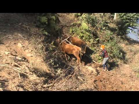 150121 Ram Ploughing Tsirang Bhutan
