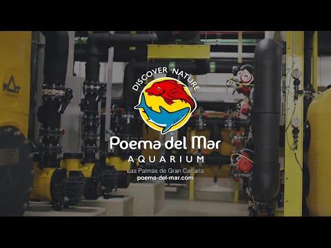 The Heart of Poema Del Mar Public Aquarium