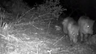 Восьмилетний мальчик установил скрытые камеры в лесу, его открытие удивило учёных!