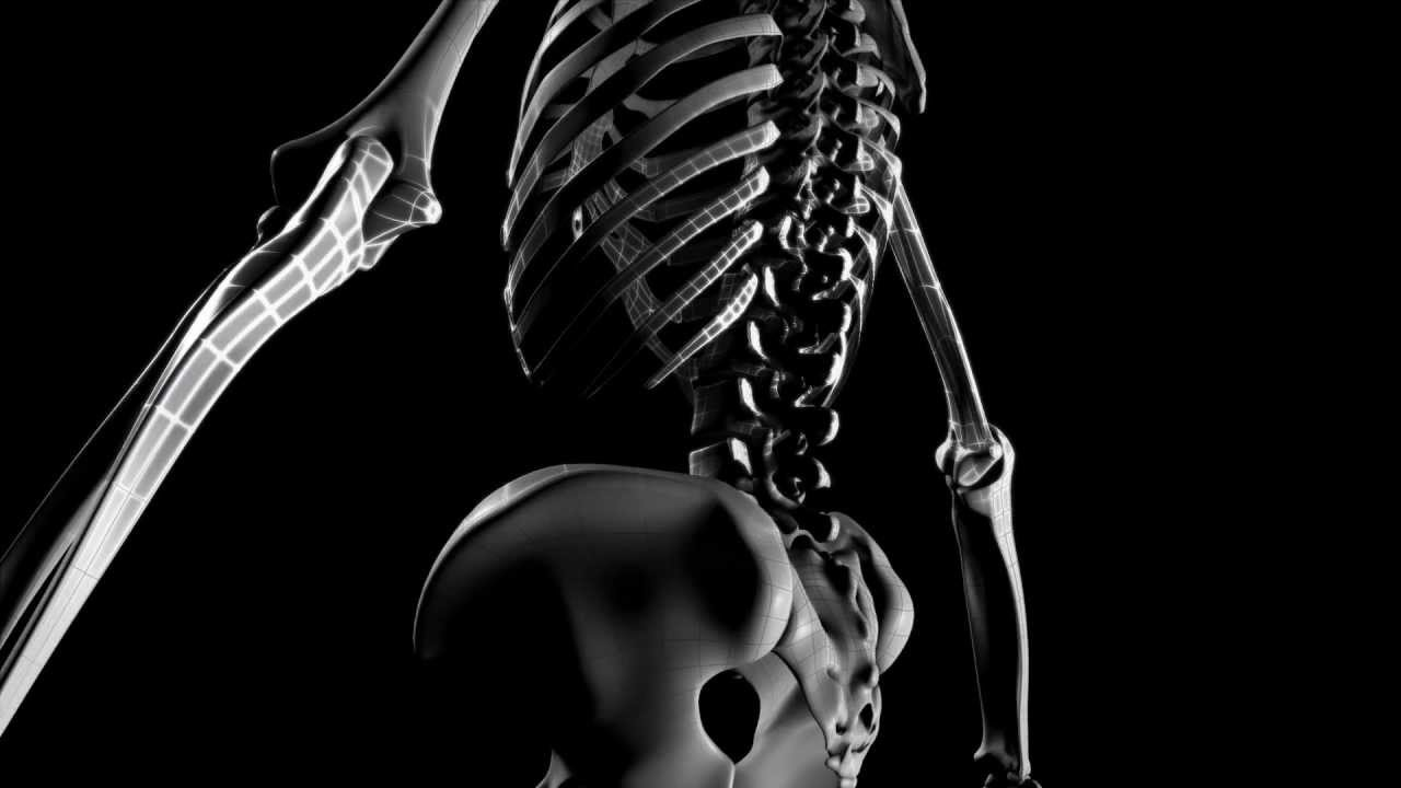 Woman Anatomy Project 3D Skeleton
