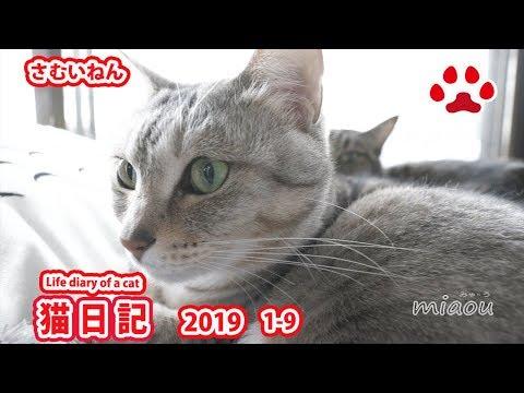 【猫日記】寒いと相手にしてくれない猫達 Cat diary January, 2019 Cat's didn't care about me when the weather is cold