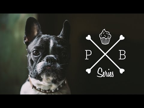 HomeMade Dog Food - Chicken Liver Pâté Cakes & French Bulldog || PetBox-Bakery For Pets || GastroLab
