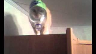Кот в бутылке ))