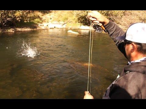 Fly Fishing Putah Creek Ft. Jordan Romney!