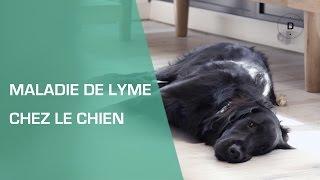 La maladie de Lyme chez le chien - Animaux