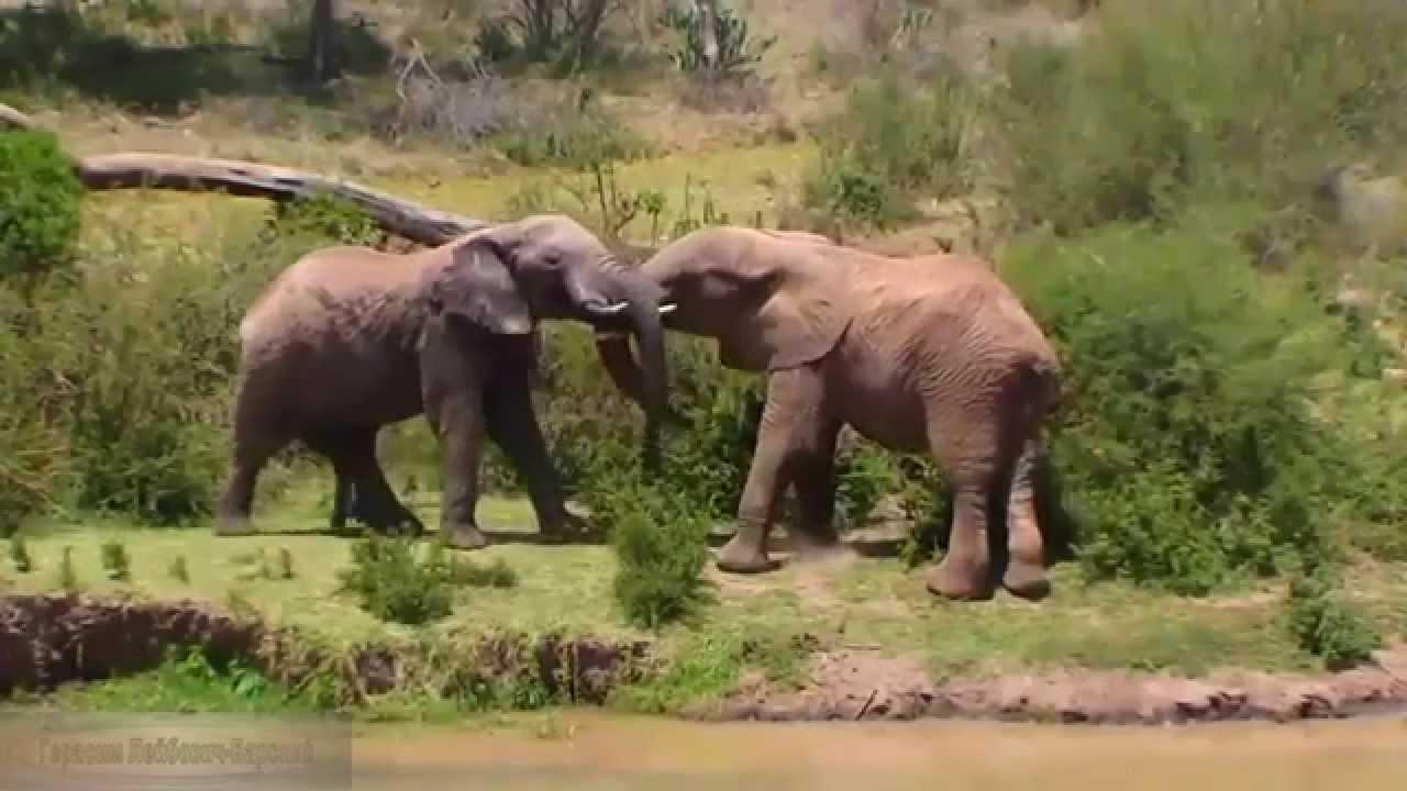 Мир хищников африки фильмы порно