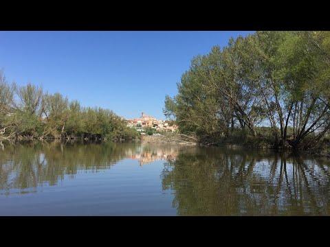Buscan en el Duero a un cocodrilo del Nilo