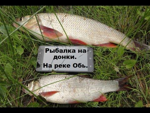 Рыбалка на донку на реке Обь
