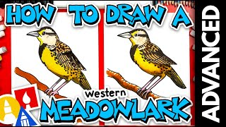 How To Draw A Western Meadowlark Bird - Advanced