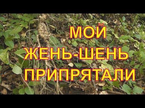 Как самому выращивать женьшень (1988 г) - Диагностер
