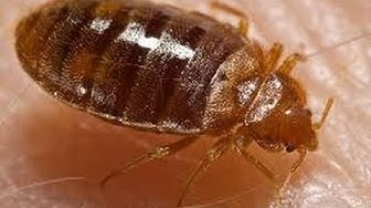 How to Get Rid of Bed Bugs in Columbus OH