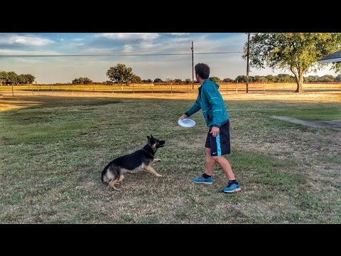 Ultimate Frisbee Dog | Brodie Smith
